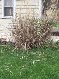 Tall Grass Landscaping by Plant Care Is This