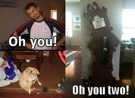Oh You Dog Meme - some good puns with oh you meme 11 pics picture 2 izismile com