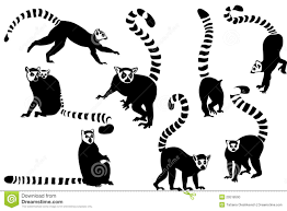 lemur clipart black and white pencil and in color lemur clipart