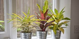 10 best house plants easy plants to care for