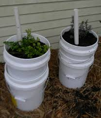 self watering self watering garden containers u2013 5 gallon buckets upated 8 2015