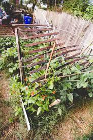 eco city farms u2013 farm talk a view of reinal u201croy u201d caspari u0027s