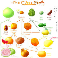 Fruit Family Tree