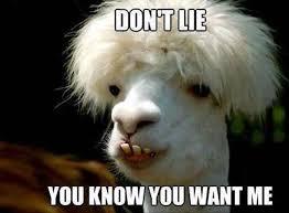 Camel Memes - don t lie you know you want me camel meme picsmine