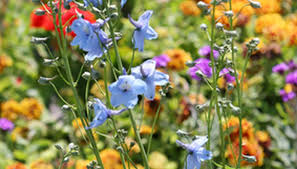 examples of angiosperm flowering plants garden guides