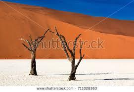namib desert dead tree deadvlei white stock photo 711028363