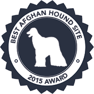 afghan hound puppies youtube aaawww afghan hounds hosanna akc registered dog breeder home page
