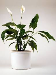 fresh easy to care for houseplants that improve the interior