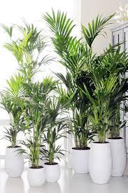 plante verte dans une chambre marvelous plante verte pour chambre 10 bien être ooreka helvia co