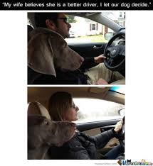 Dog In Car Meme - dog in car while women drive by olddoghater meme center