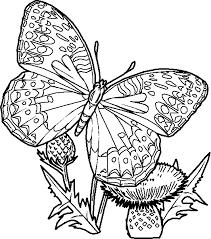mandala papillon imprimer gratuitement 15 dessin de mandala