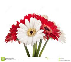 white and red flowers bouquet royalty free stock photography