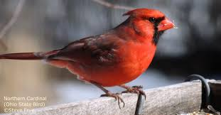 ohio wild birds backyard bird feeding watching oh