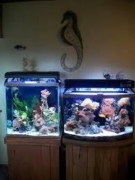 stunner led aquarium light strips dennerle nano marinus marine pinterest aquariums