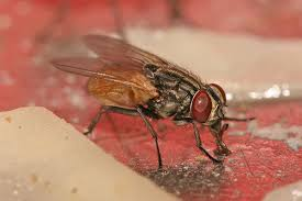 Cool Names For Your House by Housefly Wikipedia