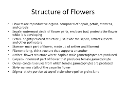 Part Of Flowers - ch 24 reproduction of seed plants ppt video online download
