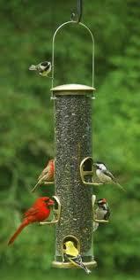 Backyard Wild Birds by Wild Bills Squirrel Proof Bird Feeder When A Squirrel Lands On A