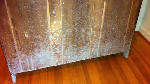 white mold growth in your home causes u0026 solutions environix