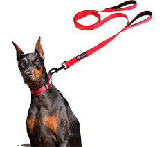 nissan rogue for dogs dog leash 2 handles extra long 8ft lead black heavy duty