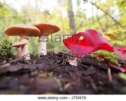 mushrooms at gatineau park thanksgiving weekend canada
