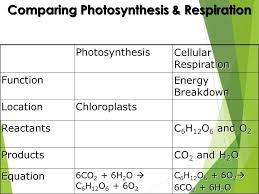 awesome photosynthesis and cellular respiration worksheet new synthesis and cellular respiration worksheet synthesis concept hi