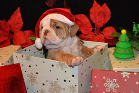dogs are the most beautiful gift daily magazine
