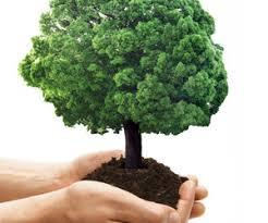 rights of plants trees in islam tawheedmovement حركة