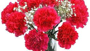 flowers with free delivery marvelous flowers with vase free delivery luxury flowers free
