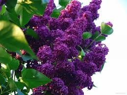 320 best shrubs bushes small trees images on