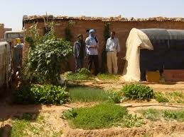 Family Gardens Starvation In Refugee Camps Or Salvation By Family Gardens