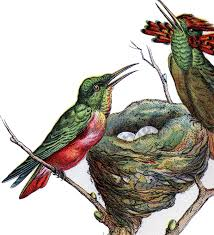 lovely vintage hummingbird image the graphics fairy