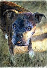 boxer dog reverse brindle baby reverse brindle boxer dog art print of original drawing