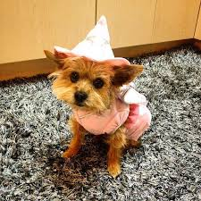 100 yorkie halloween costume 20 puppy costume ideas puppy