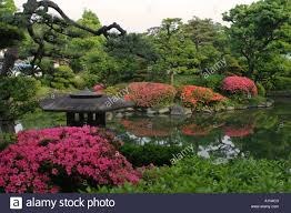 typical lush green japanese garden with bright pink flowers and