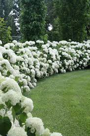 flowers gardens and landscapes the most exquisite gardens and landscaping ever hydrangea