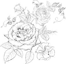 bouquet of roses vector illustration stock vector colourbox