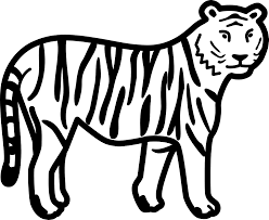 white tiger clipart forest animal pencil and in color white