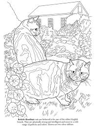 tabby cat coloring pages the cat lovers u0027 coloring book dover publications coloring pages