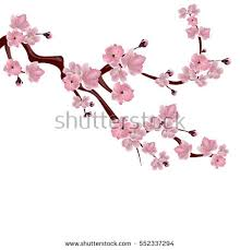 vector cherry blossom branch stock vector 116644975