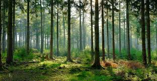 Mda to provide operational forest change detection alerts for app