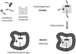 template synthesis of porous organic polymers sciencedirect