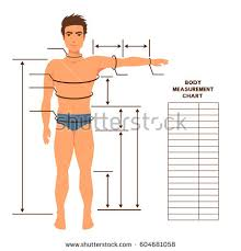 royalty free stock photos and images male body measurement chart