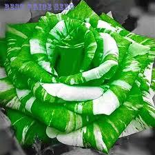 green roses 100 pcs white green seeds men diy plant flower seeds for