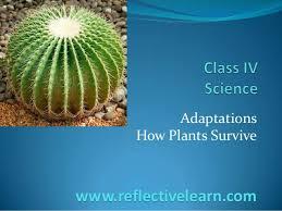 class iv science plants adaptation