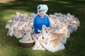 queen elizabeth dog 90 corgi pillows are posed in photos to honor queen elizabeth for