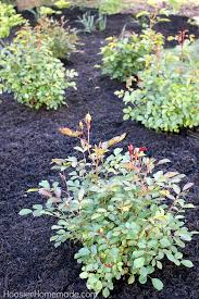 How To Design A Flower Bed How To Design A Small Rose Garden Hoosier Homemade