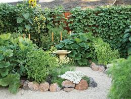 backyard vegetable garden to have a fresh and healthy consumption