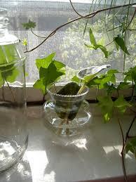 Best Plants For Desk by Indoor Water Garden U2013 Growing Plants In Water Year Round
