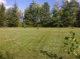 native plants of ohio planted a nice variety of native ohio trees my desultory blog