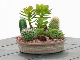 best 25 small cactus garden design 25 best ideas about mini